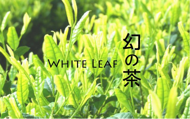 白茶 バナー400
