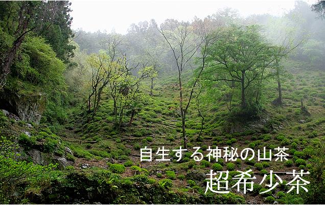 りぐり山茶 バナー400