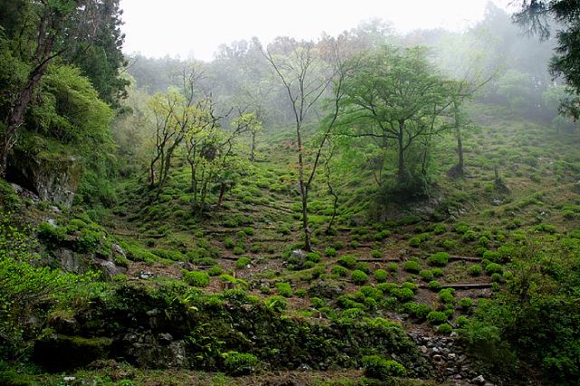 りぐり山茶 茶園